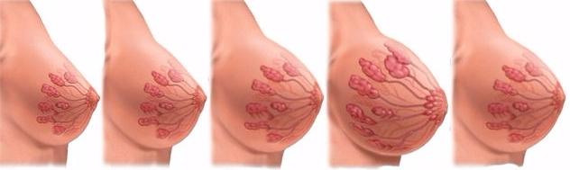 грудь у беременных