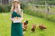 Можно ли кушать яйца во время ГВ и в каком виде