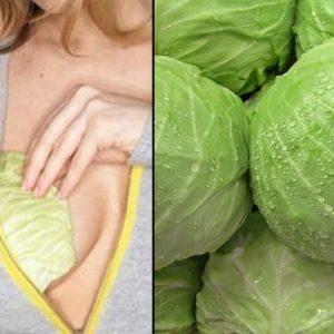 Капустный лист для лечения мастопатии: как правильно использовать
