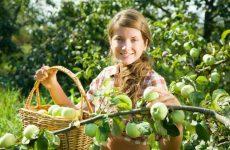 Полезные рецепты из яблок для кормящих мам: шарлотка, компот, запеченные